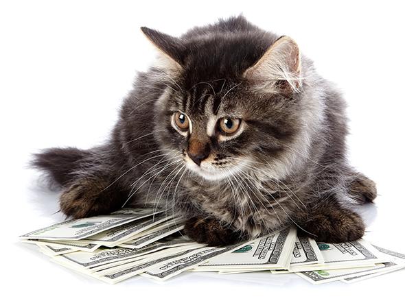 חתולים, כלבים וצוואות מוזרות: האם ניתן להוריש רכוש לכל אחד?